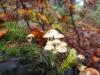 Bild 8 Blick auf Pilze am Boden