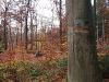 Bild 9 Blick in den Wald