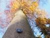 Bild 15 Blick in eine Baumkrone
