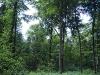 Bild 3 Blick in den Wald